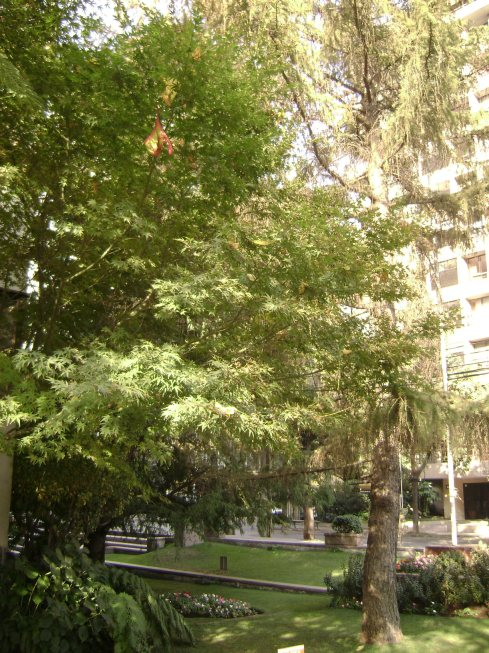 árboles pintorescos1